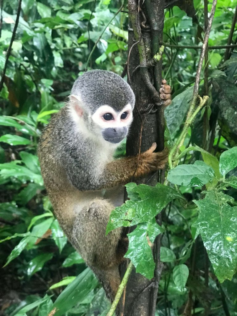 viaje-amazonas-on-vacation