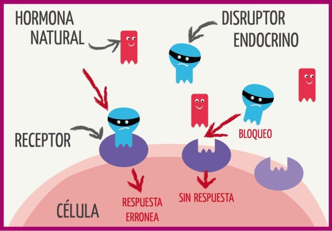 bpa-disruptor-endocrino