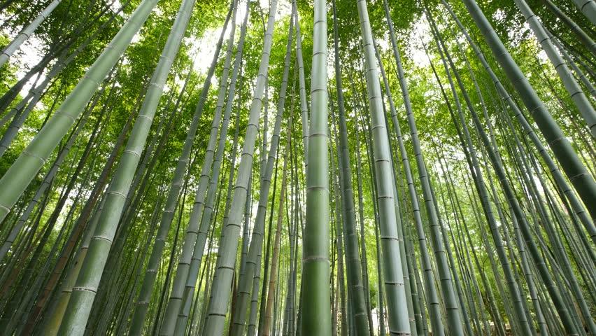 productos-ecológicos-en-bambú