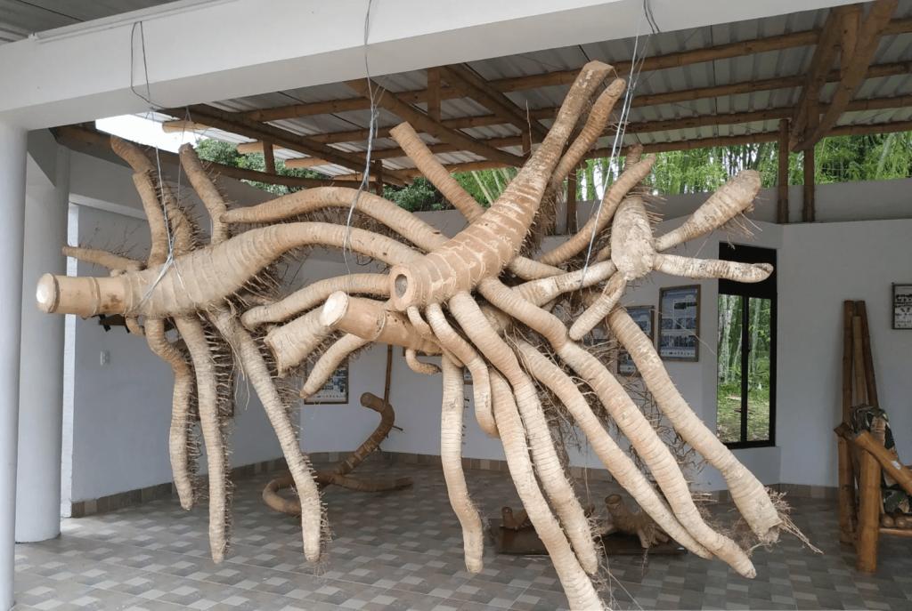 por-que-el-bambú-es-ecologico